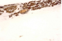 und im Schnee